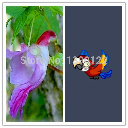 100pcs Parrot Orchid rare orchid seeds from china  flowers-seed  ornamental-plant  flower seeds $0.95 / lot