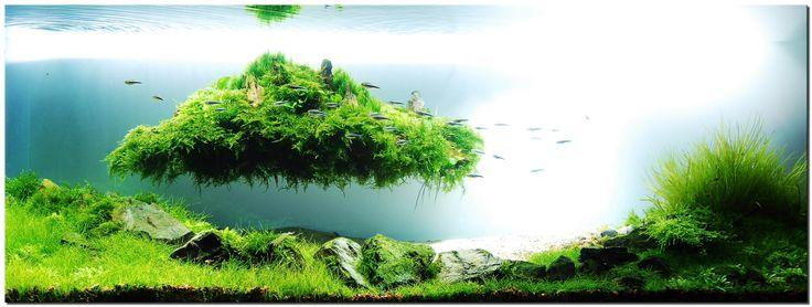 floating island nature at work pinterest inseln und schwimmende insel. Black Bedroom Furniture Sets. Home Design Ideas