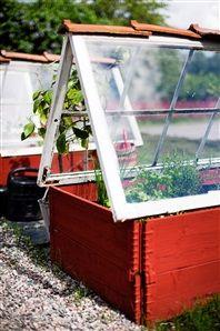 Familjen har byggt drivbänkar med fönster som tak.