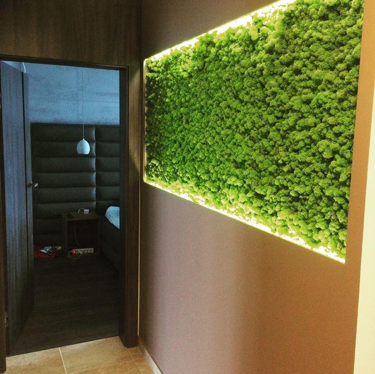 Chrobotek reniferowy - zdjęcie ścianki od klienta.