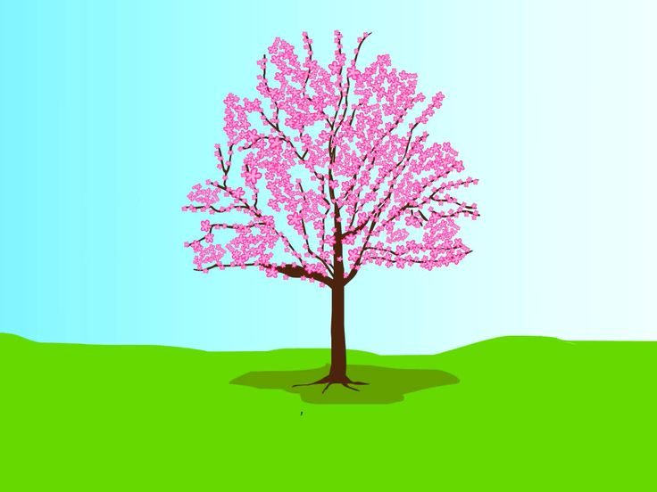 Grow A Cherry Blossom Tree Trees Cherries And Cherry