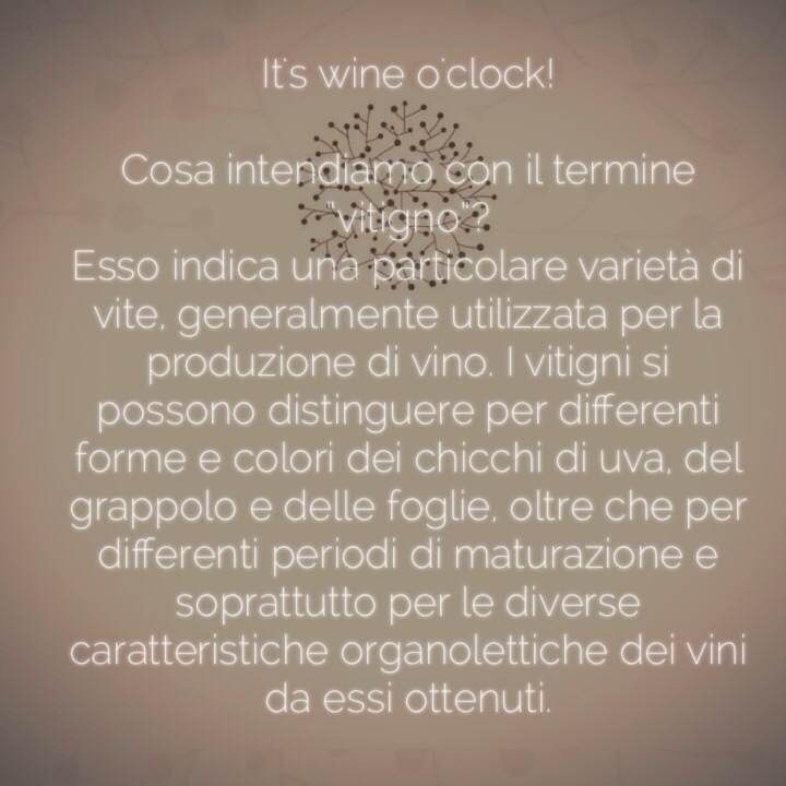 Cosa intendiamo con il termine #vitigno? #vino #winelovers #wineoclock #winetime  San Marzano Cantine
