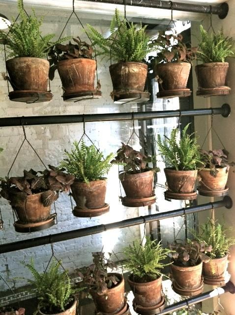 Spotted at Red Farm in New York: A genius system for hanging terra cotta pots indoors, by Creme Studio. How-to: I'm tempted to try this at home.