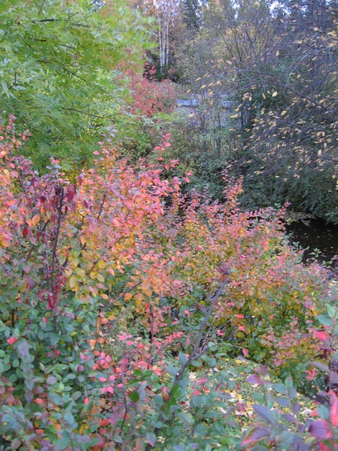 Autumnal color play in Sep 2008.