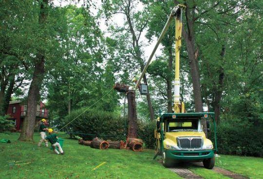 Tree Experts Will Make Your Job Easier #treecare #treecutting #treeremoval