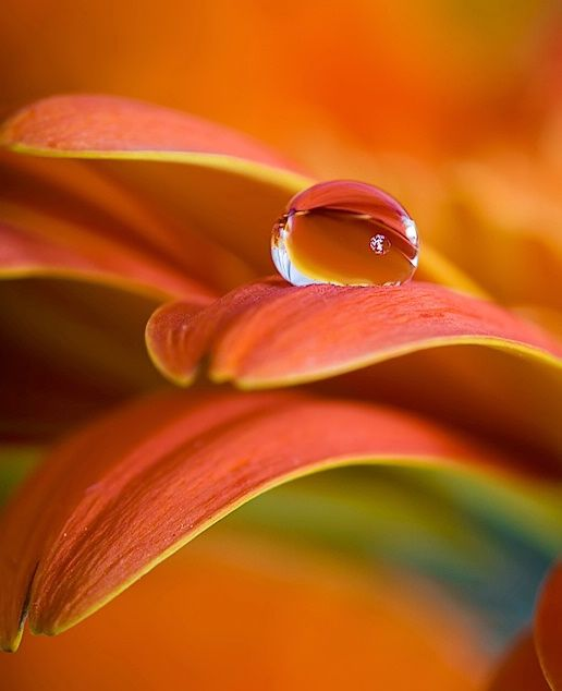 Water drop                                                                                                                                                                                 Plus