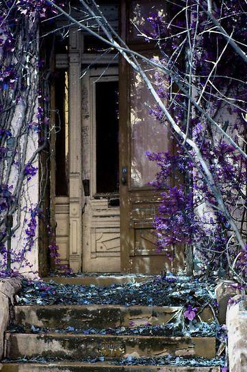 ...Old House, Doorsdutch Doors, Roddy Fitzgerald, Abandoned Home, Rustic Doorsdutch, Flower Vines, Beautiful Abandoned, Old Doors, Purple Flower
