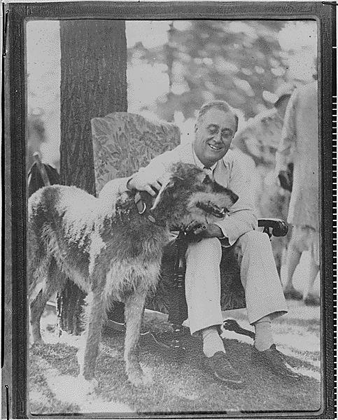 Franklin D. Roosevelt with Irish Wolf Hound, 1933
