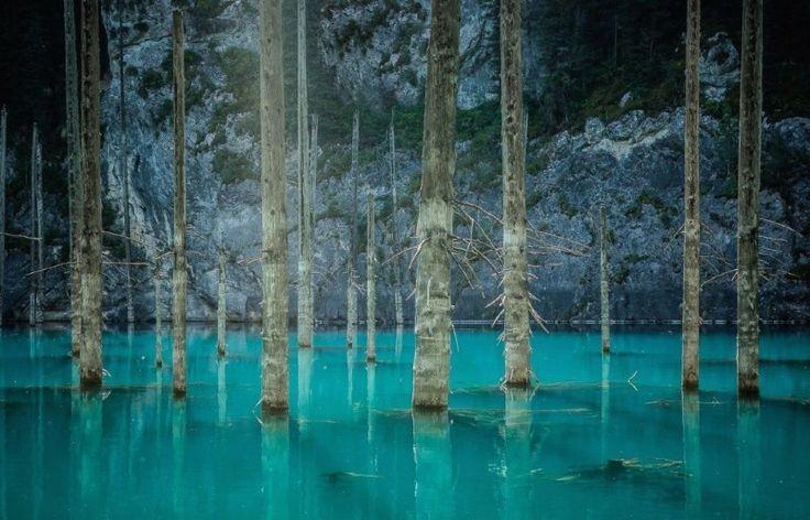 что затопленный лес фото относится славной