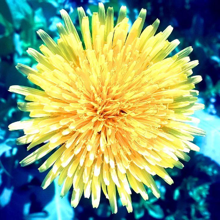 Flower in spring.