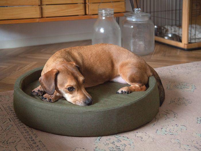 犬 猫兼用デニムデザイン ペットベッド ラウンド型 Mサイズ 北欧インテリア 家具の通販エア リゾーム ペットベッド ペット 犬の家具
