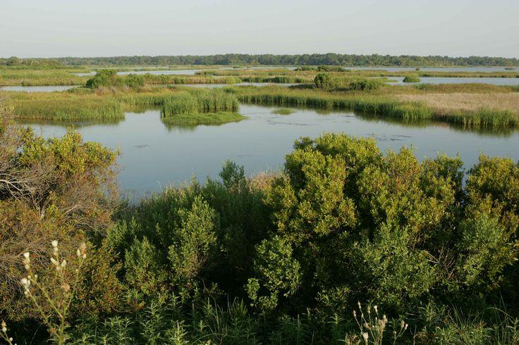 Image result for marsh land swamp