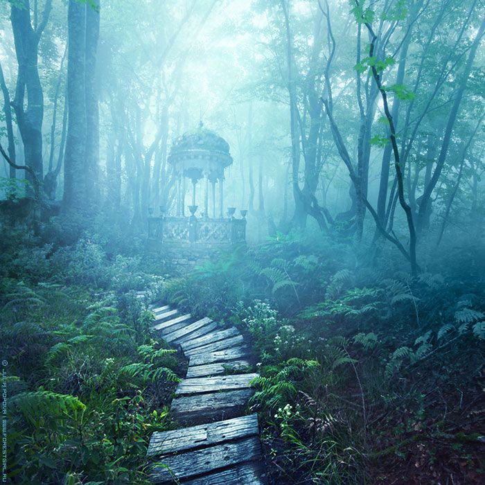 Mysterious woodland path leading to the unknown.