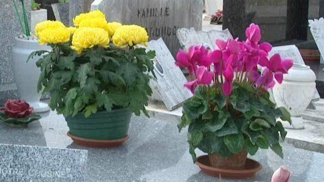 Ce week-end, les familles se rendront sur les tombes de leurs proches pour célébrer la Toussaint. A Nice, il existe un petit marché de vente de fleurs devant le cimetière de Caucade, il a lieu tous les ans. La tradition du fleurissement des tombes y est très suivie mais pour combien de temps ?