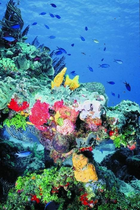 Snorkeling in Cozumel, Mexico.I want to go see this place one day.Please check out my website thanks. www.photopix.co.nz