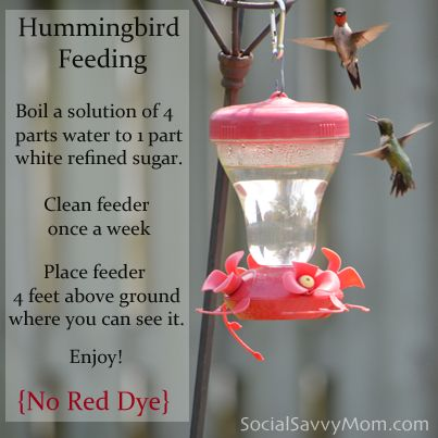 Hummingbird Food & Recipe:Boil 4parts water and 1part white sugar for 2min.  Clean feeder once a week.