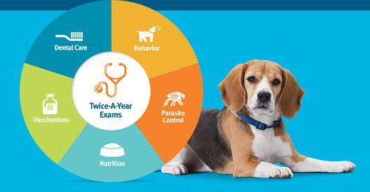 Veterinary Hospital Providing Superior Pet Health Care Services Pet Health Care Animal Hospital Pet Care Printables