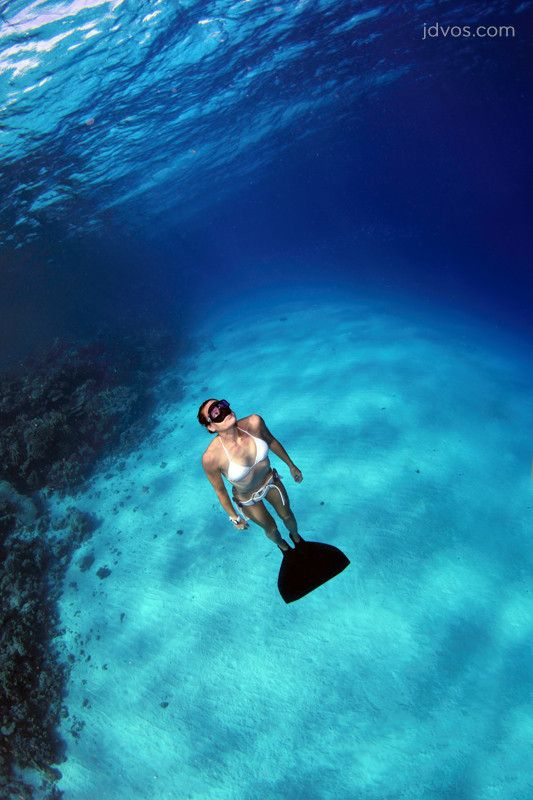 17 Best Images About Free Diving Freedom On Pinterest