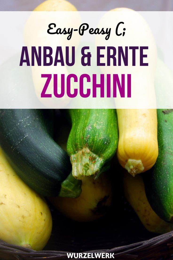 Der Komplette Zucchini Guide Zucchini Pflanzen Anbauen Ernten Wurzelwerk Zucchini Pflanzen Zucchini Anbau Pflanzen