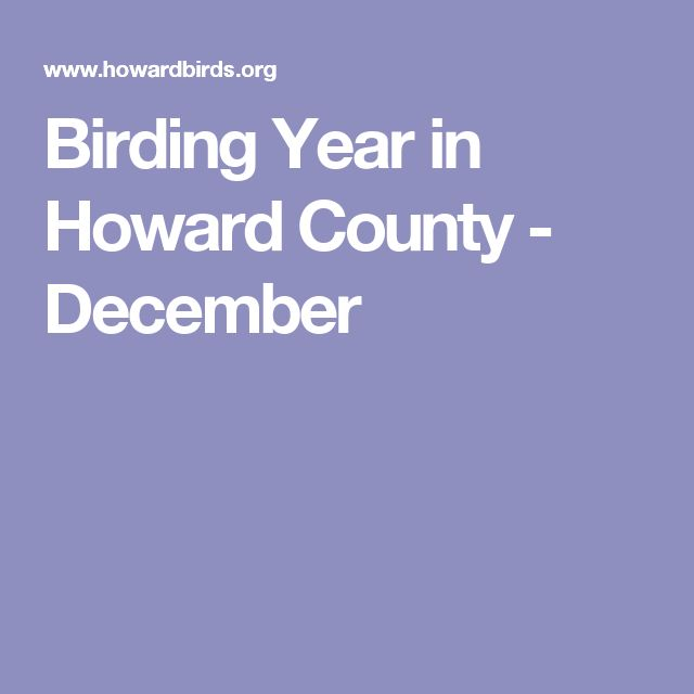 Birding Year in Howard County - December