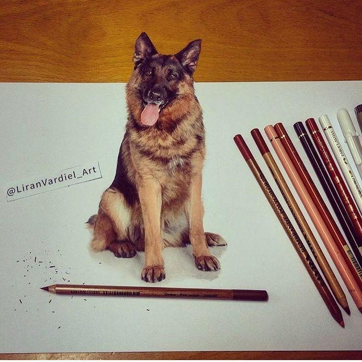 German Shepherd. Animal Drawings using Colored Pencils. By Liran Vardiel.