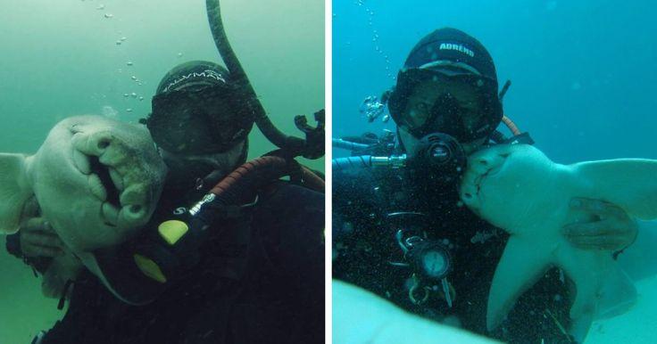 Εδώ και 7 Χρόνια Κάθε Φορά που Πηγαίνει για Κατάδυση έρχεται αυτός ο Καρχαρίας και τον Αγκαλιάζει! Crazynews.gr