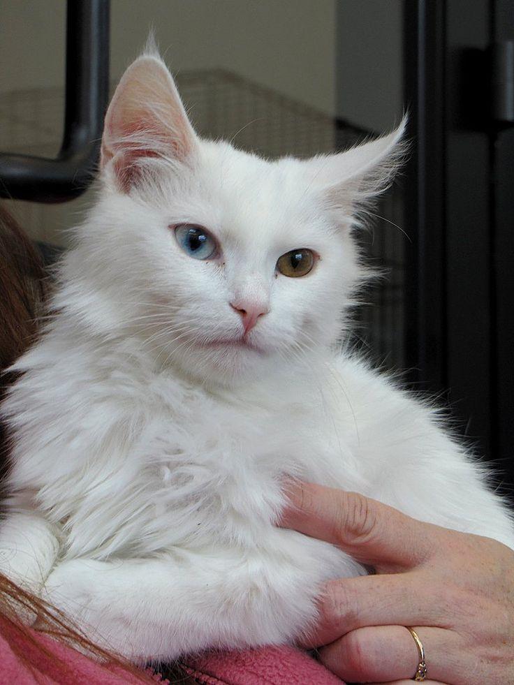 Gatos blancos                                                       …