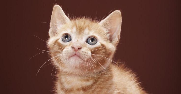 Cómo hacer el emoticono de un gato. A muchos usuarios les gusta incluir emoticonos cuando envían mensajes de texto, instantáneos o correos electrónicos. Un emoticono es una combinación sin sentido de letras, símbolos y números que crea un mensaje o una imagen para el usuario. El más conocido es la carita sonriente, que se crea combinando los dos puntos con un paréntesis derecho :). ...
