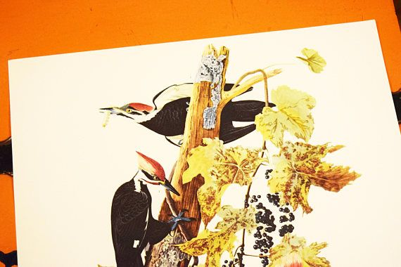 https://www.etsy.com/ca/listing/562306520/pileated-woodpecker-print-audubon-folio?ref=shop_home_active_74
