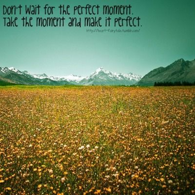 perfect: Yellow Flowers, Islam Quotes, Flowers Fields, Landscape Design, Newzealand, Flowers Ideas, New Zealand, Gardens Plants, Landscape Flowers