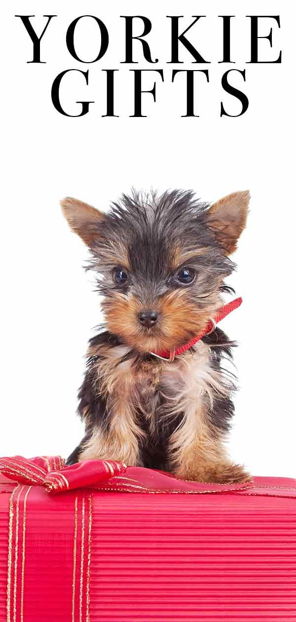 Yorkie Gifts Top Presents For Yorkshire Terrier Lovers With Images Yorkie Yorkshire Terrier Yorkie Lovers