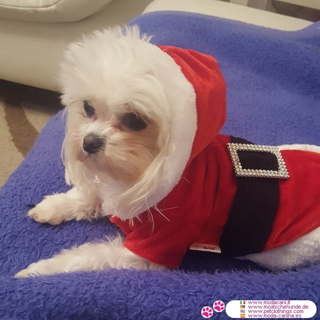 Déguisement Père Noël pour Chien #VetementChiens #BichonMaltais - Déguisement Père Noël pour Chien: une veste rouge et blanche avec capuche, et une ceinture noir: parfait pour toutes les races de chiens!