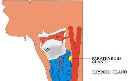 Ipotiroidismo: tutti i sintomi e i rimedi - L'ipotiroidismo è una affezione endocrina che può essere congenita o acquisita, dovuta alla mancanza o alla ridotta dimensione della tiroide. Quali sono i sintomi e le terapie?