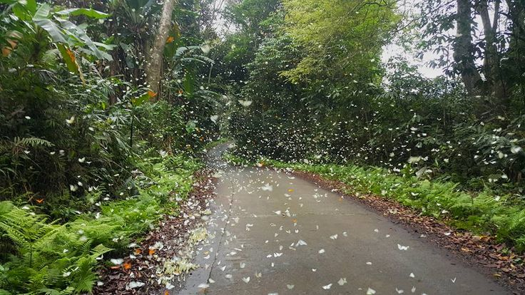 Are you ready to be overwhelmed by butterflies at Cuc Phuong National Park in Vietnam ?  #Cucphuongnationalpark #nationalpark #nationalparkinvietnam #ninhbinh #cucphuongninhbinh #butterfliesatcucphuongnationalpark #butterflies #butterfliesinnationalpark