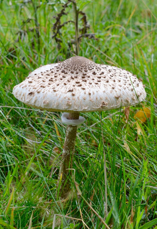 82 best mushroomdiary co uk fungi selection images on pinterest