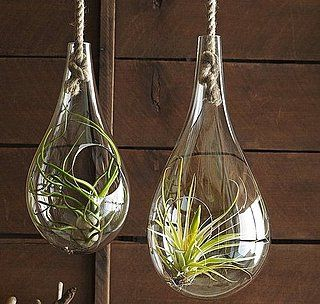 best 25 hanging terrarium ideas on pinterest copper decor hanging glass terrarium and. Black Bedroom Furniture Sets. Home Design Ideas