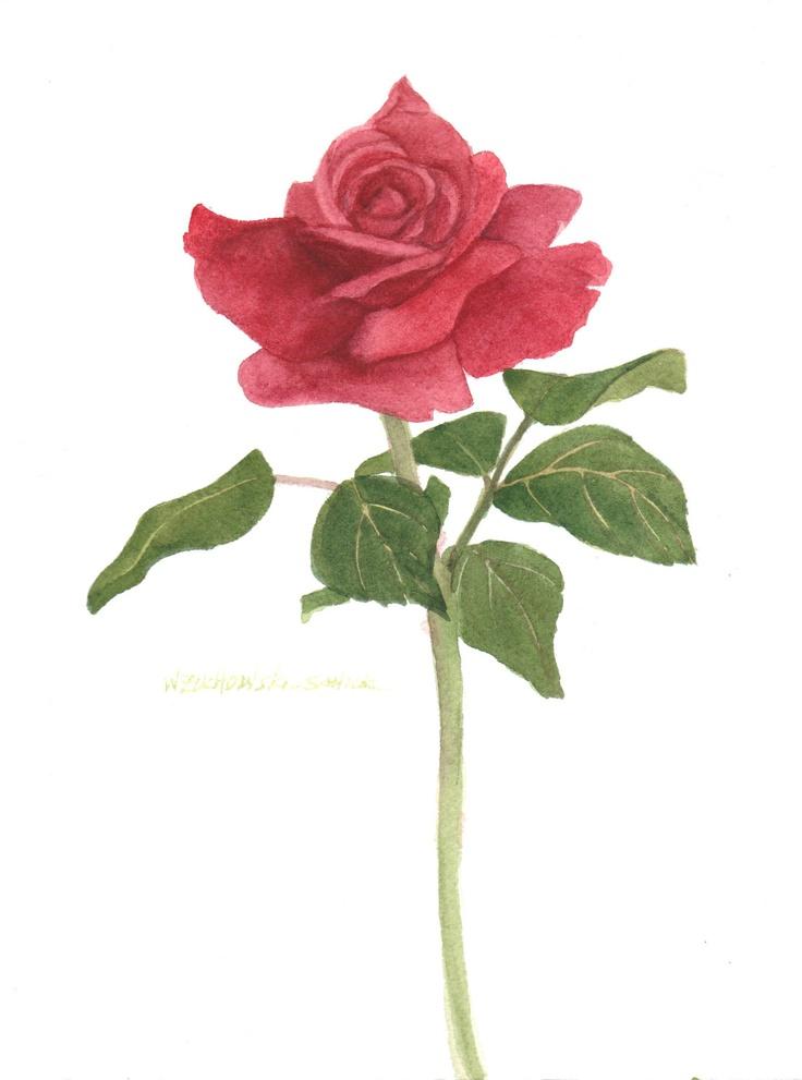 Een enkele roos; Eenvoud.