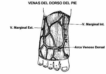 Proc. Invasivos del Sistema Vascular - Puncion Venosa