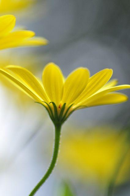 Yellow by Lizzardgirl, via Flickr