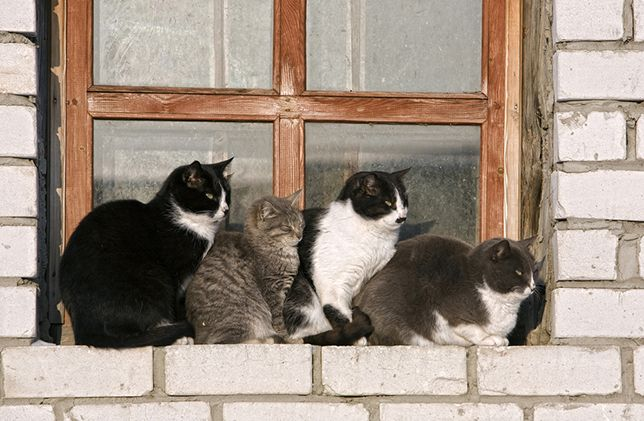 4 cats in window