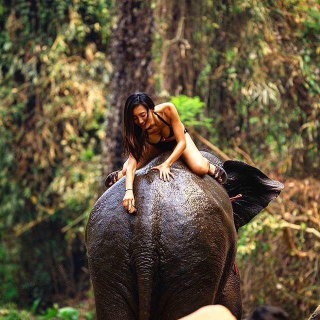 Sexy Woman in bikini riding bareback on an Elephant in the jungle. How a mahout takes care of their elephant. Everyday you have to give their backside a scrub to prevent any issues. Bikini is an optional outfit for this task but highly encouraged. #thailand #nomadicyear #왈가닥부부 #кругосветка #elephant . . . #dslr #hot #ridingelephants #pataraelephantfarm #chiangmai #таиланд #слон #чиангмай #mahut #sexy #cleaning