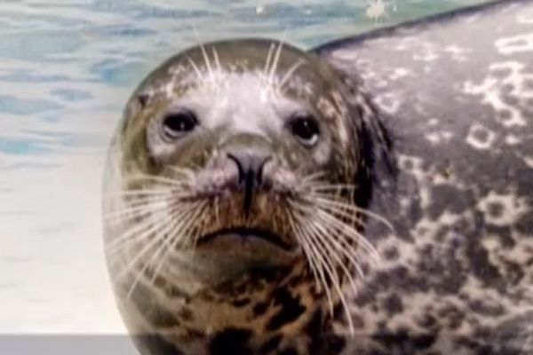 'Shark Week' Kills Snuffy The Seal, Humans Overreact — Watch