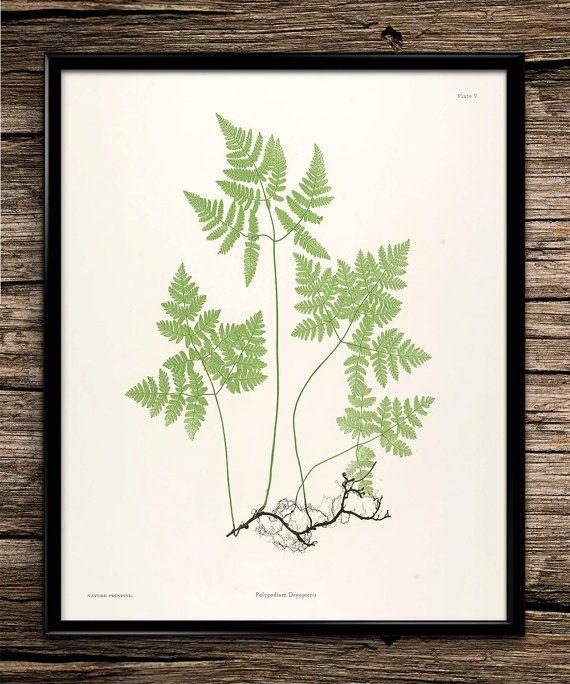 Fern Botanical Set Vintage Prints Botanical by UniquelyGiftedArt