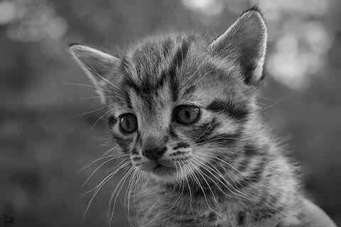 Little #cat