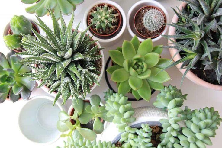 Succulent Gallery Succulents Friends Www Succulentsand