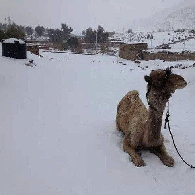 snow in Cairo, Egypt December 2013, 1st snow in 112 years