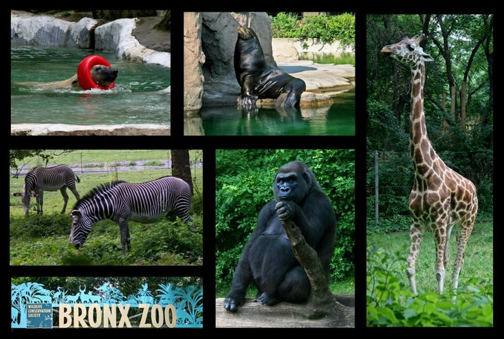 Kids Events This Weekend at The Bronx Zoo (Aug 24-25) - http://www.themamamaven.com/2013/08/23/kids-events-this-weekend-at-the-bronx-zoo-aug-24-25/ @Elizabeth Miller