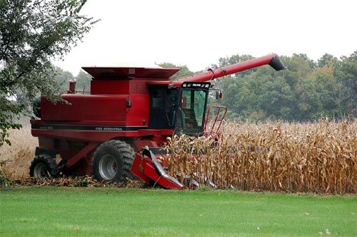 Combine harvesting corn in Fall. When the corn plant is dry enough, it is stripped of the ear of field corn by the combine head and then the ear is run through the combine where the kernels are knocked off the cob. The kernels are stored in a large bin on the combine called the hopper and the remaining trash is chopped up and spit out the rear of the machine. Soybeans are also a common crop grown in Iowa. Combining them requires a different head (the front part of the combine is detachable).