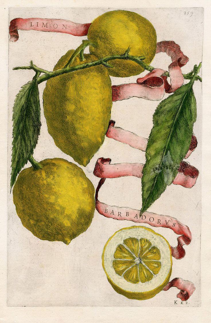 Giovanni Baptista Ferrari Original Citrus Prints 1646