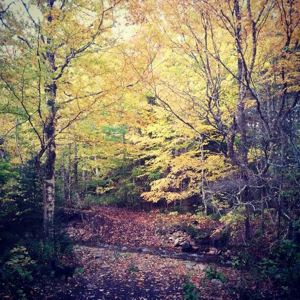 Beautiful Fall colours Margaree